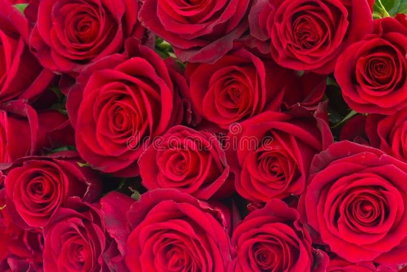 Bukett av mörker - röda rosor arkivbild