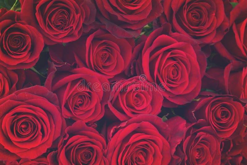 Bukett av mörker - röda rosor royaltyfri foto