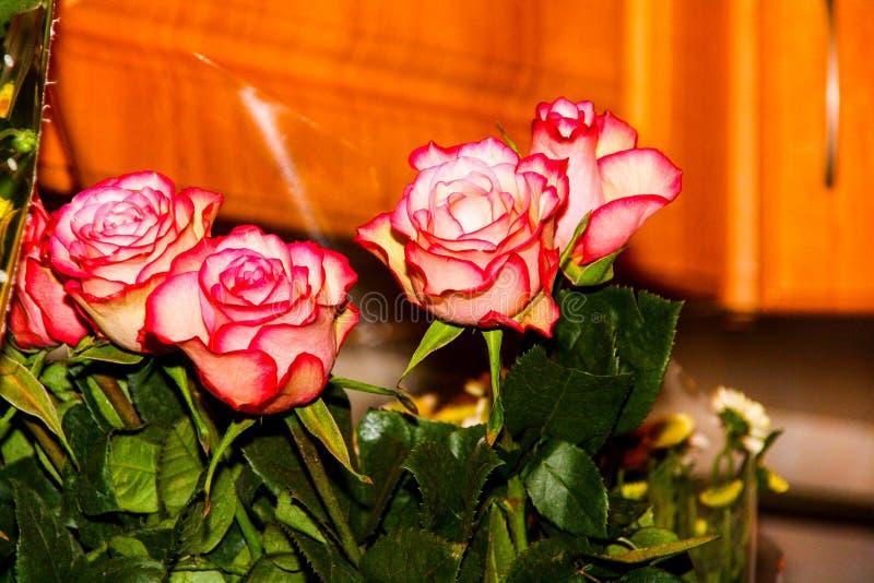 Bukett av m?rka rosa rosor arkivfoton