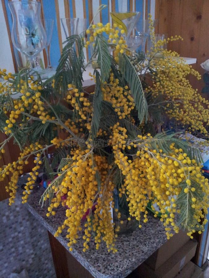 Bukett av mimosan royaltyfria foton