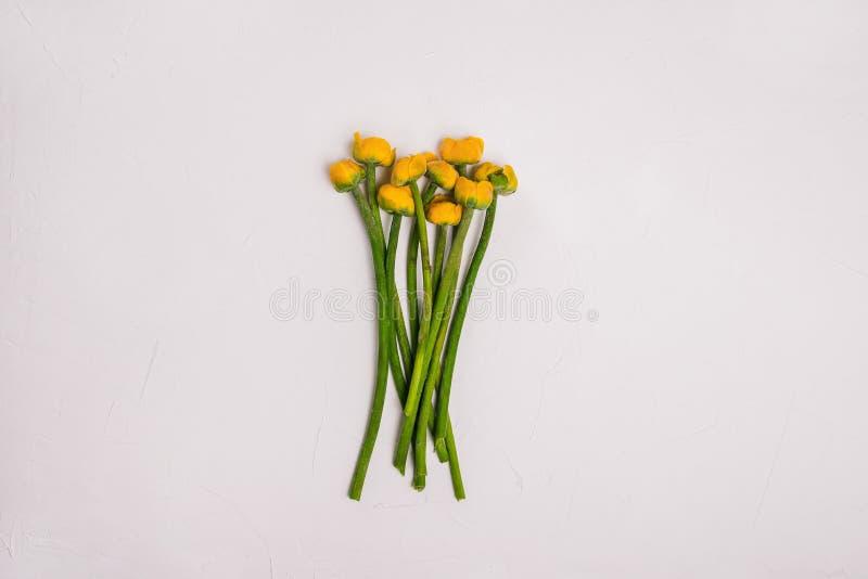 Bukett av näckrors med gula knoppar och gröna långa stammar Härliga ljusa blommor på en vit bakgrund Sommarlynne, royaltyfri bild