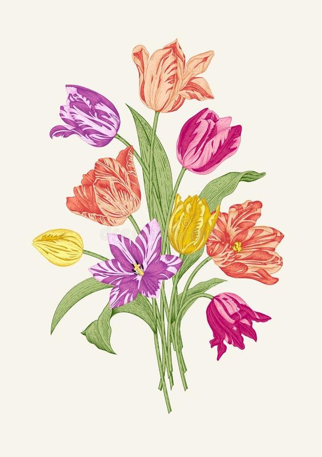 Bukett av nio färgrika tulpan royaltyfri illustrationer