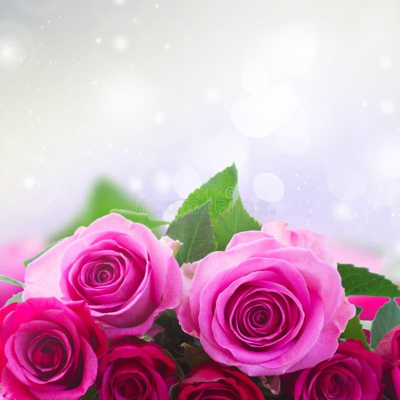 Bukett av nya rosa ro arkivfoton