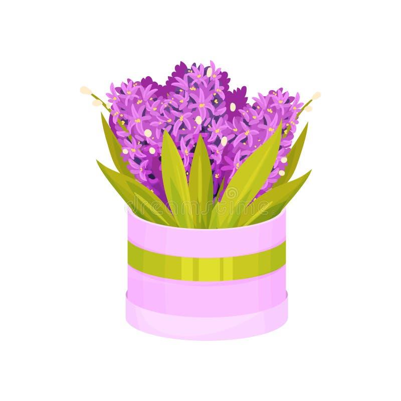Bukett av purpurfärgade hyacinter i en rund ask white f?r vektor f?r bakgrundsillustrationhaj vektor illustrationer