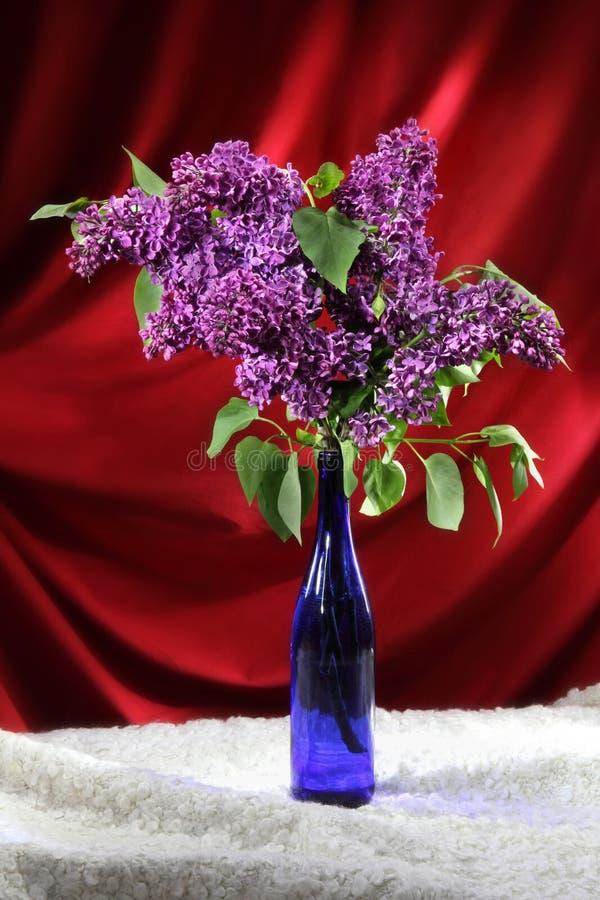 Bukett av purpurfärgade lilor i blå vas på röd draperad bakgrund fotografering för bildbyråer