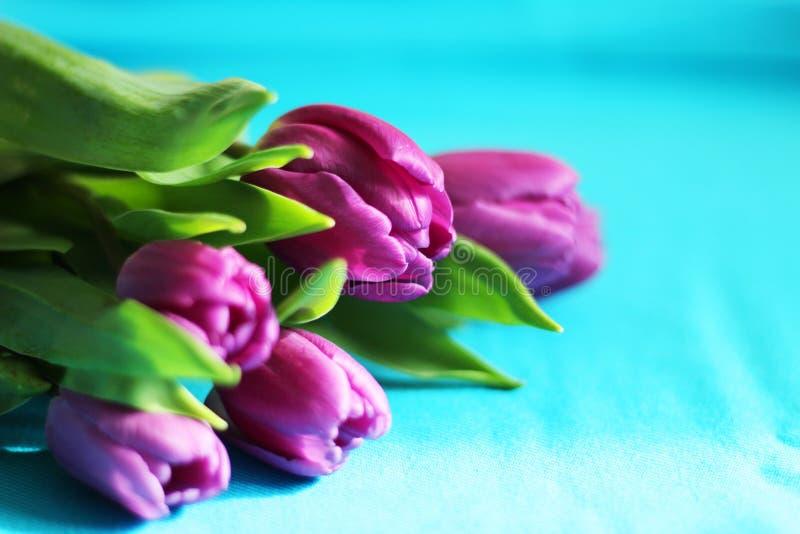 Bukett av purpurfärgade tulpan, selektiv fokus, blå bakgrund, kopieringsutrymme arkivfoto