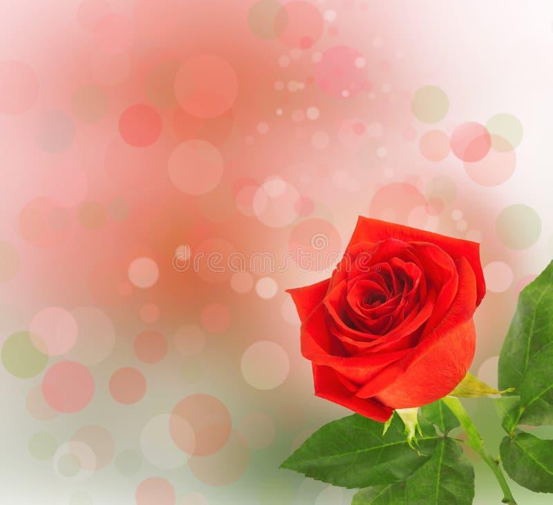 Bukett av röda rosor med gröna sidor royaltyfri fotografi