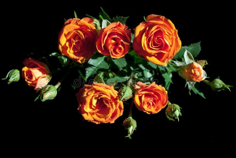 Bukett av röda rosor på mörker royaltyfri bild