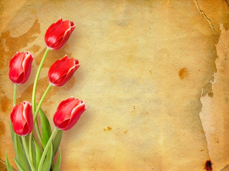 Bukett av röda tulpan med gröna sidor royaltyfria bilder