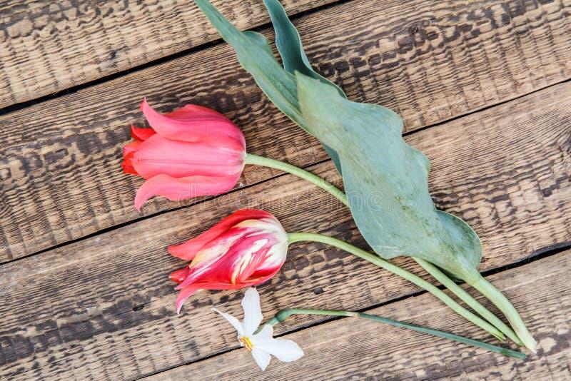 Bukett av röda tulpan och den vita påskliljan arkivfoto
