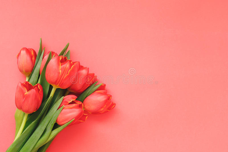 Bukett av röda tulpan på röd pappers- bakgrund arkivfoton