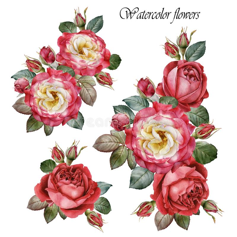 Bukett av ro Blommauppsättning av röda rosor för vattenfärg vektor illustrationer
