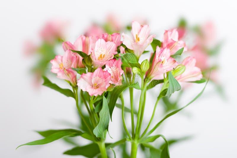 Bukett av rosa alstroemeria royaltyfri foto