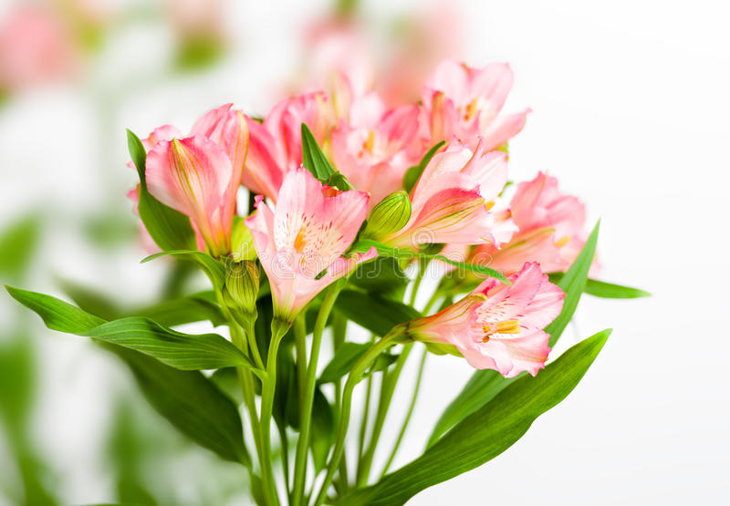 Bukett av rosa alstroemeria royaltyfri bild