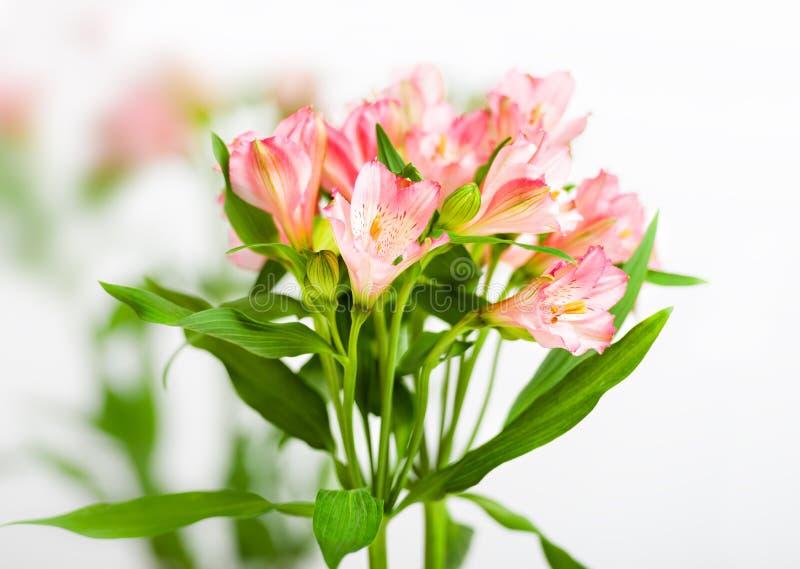 Bukett av rosa alstroemeria royaltyfri fotografi