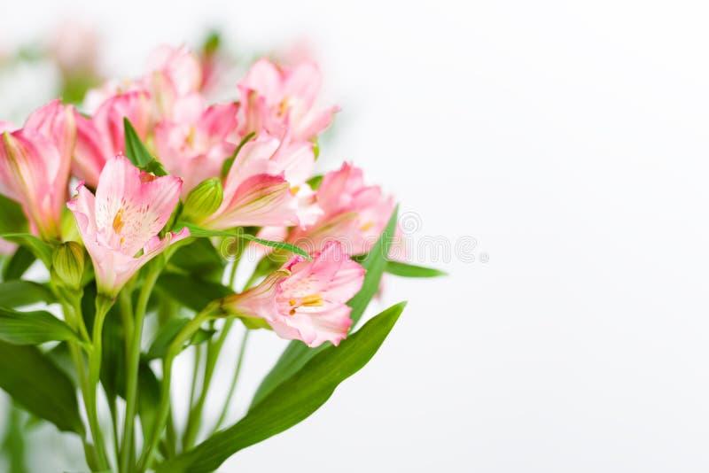 Bukett av rosa alstroemeria arkivfoton