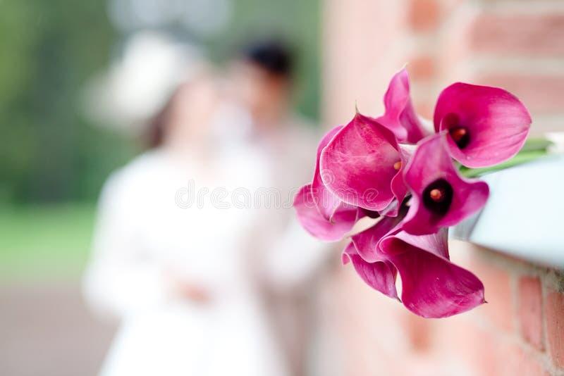 Bukett av rosa callas royaltyfri bild