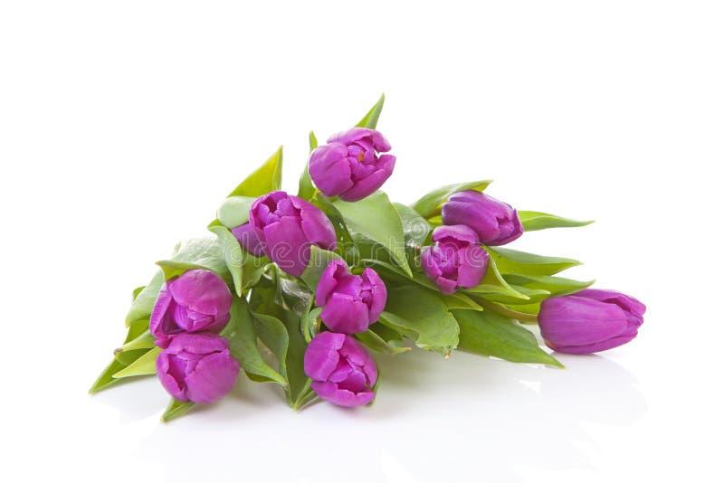 Bukett av rosa holländska tulpan royaltyfri foto