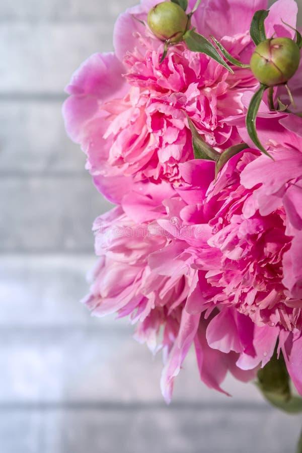 Bukett av rosa pioner royaltyfri bild