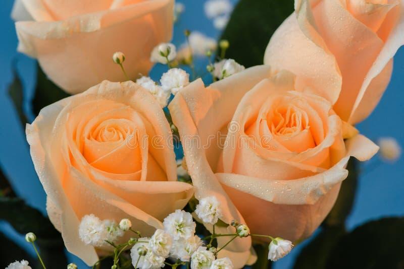 Bukett av rosa rosor med gräsplansidor och små vita blommor, arkivbilder