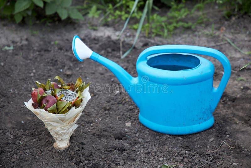 Bukett av ruttna frukter och vissnade blommor som planteras i jordningen som ett symbol av ett försök att återuppta mänsklig förb royaltyfria foton