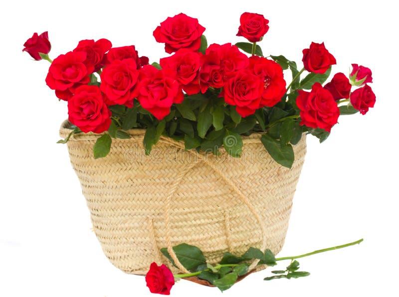 Bukett av scharlakansröda rosor i korg arkivbilder