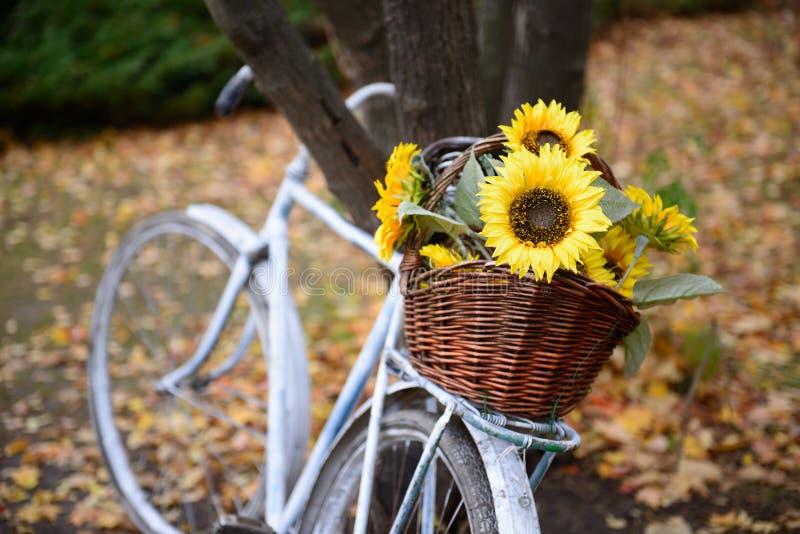 Bukett av solrosor på den retro utformade cykeln på höstskogen royaltyfria foton
