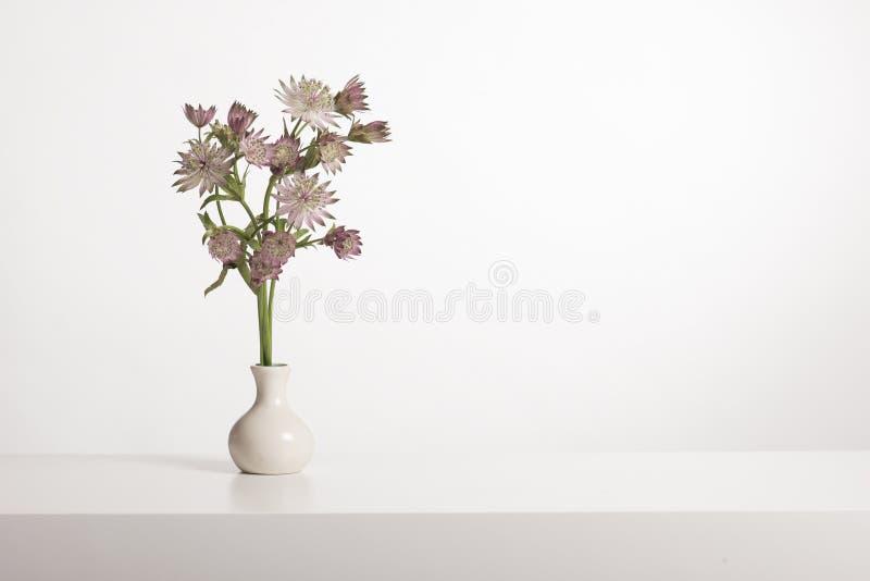 Bukett av stora masterwortblommor i en vit vas i en vit inre royaltyfri fotografi
