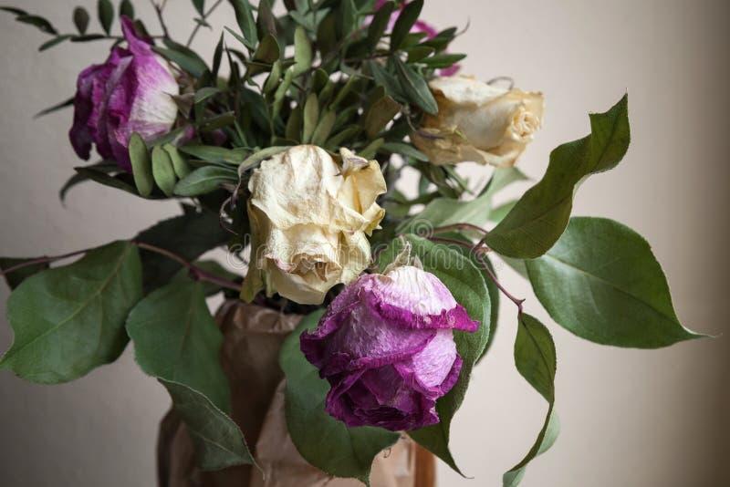 Bukett av torkade rosor, closeupbottenlägetangent fotografering för bildbyråer