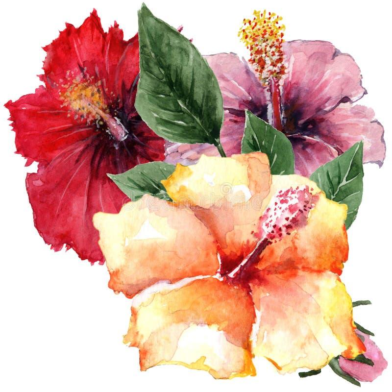 Bukett av tre hibiskusblommor och en grön kvist vattenf?rg p? vit bakgrund stock illustrationer
