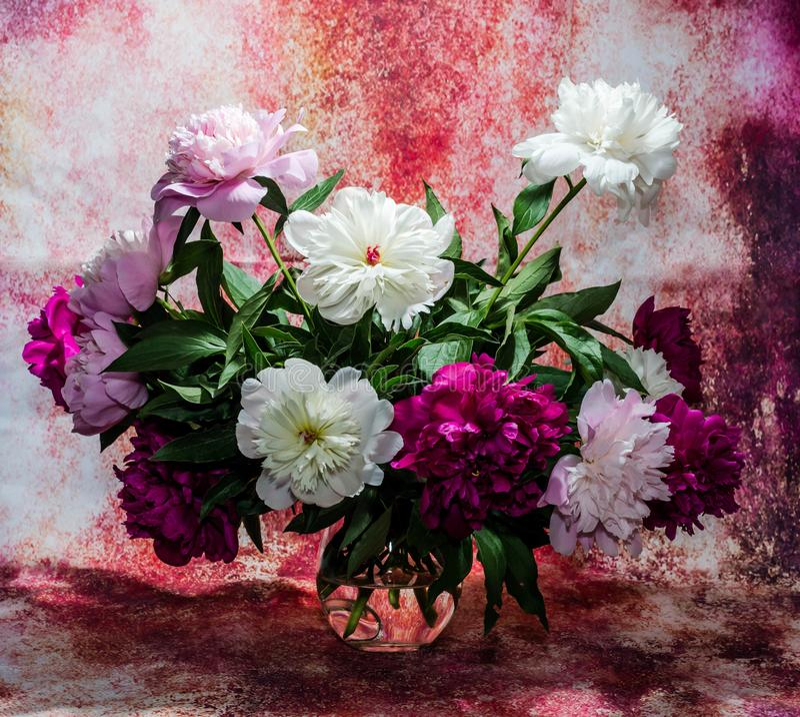 Bukett av tretton ljusa burgundy, mjuka rosa färger och vitpeon arkivbilder