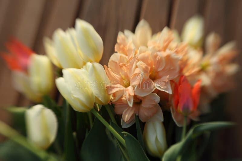 Bukett av tulpan och påskliljor arkivfoton