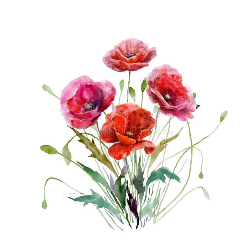 Bukett av vallmoblommor Hand dragen vattenfärgillustration Storartade blom- beståndsdelar för röda färger för design som isoleras royaltyfri illustrationer