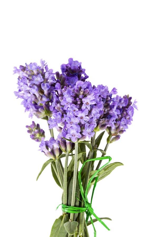 Bukett av violetta lavendelblommor som isoleras på vit bakgrund arkivbilder