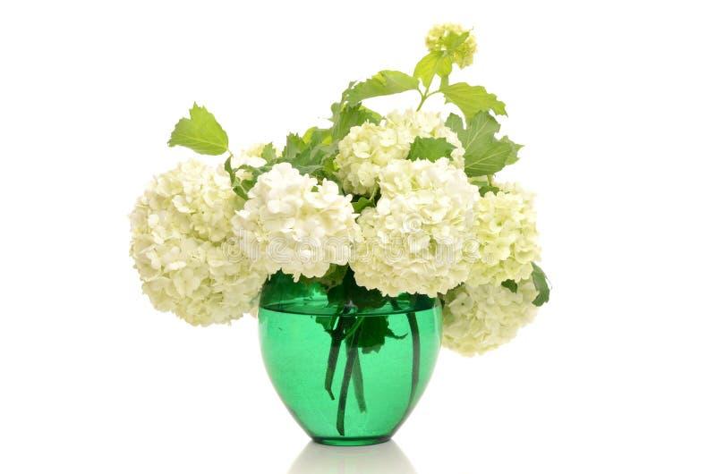 Bukett av vita blommor. royaltyfria bilder