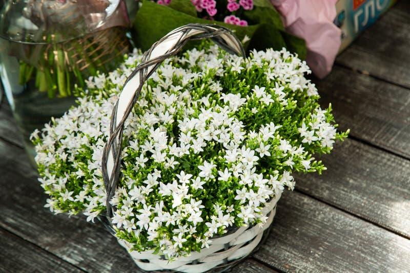 Bukett av vita blommor i en korg royaltyfri foto