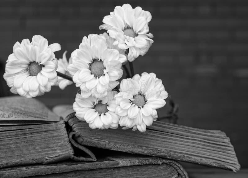 Bukett av vita blommor som ligger på två forntida böcker med suddigt arkivfoton