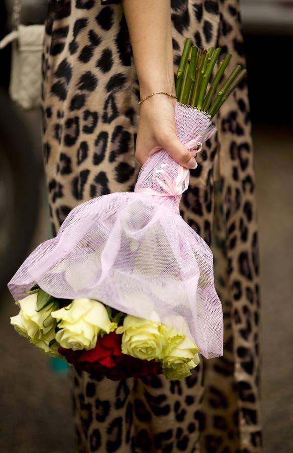 Bukett av vita och röda rosor i hand av flickan, kvinna royaltyfri foto