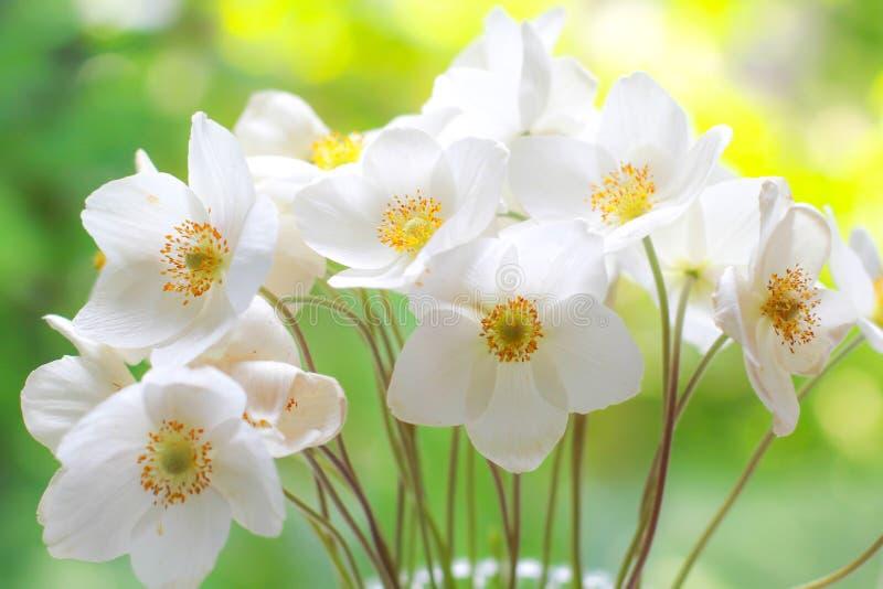 Bukett av vita vildblommor blommar nytt occasions specialen Hälsningkort, beröm, årsdag arkivfoto