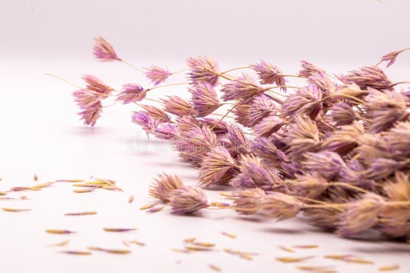 Bukett för selektiv fokus av torkade blommor på vit bakgrund Suddig och mjuk gräsblomma arkivfoto