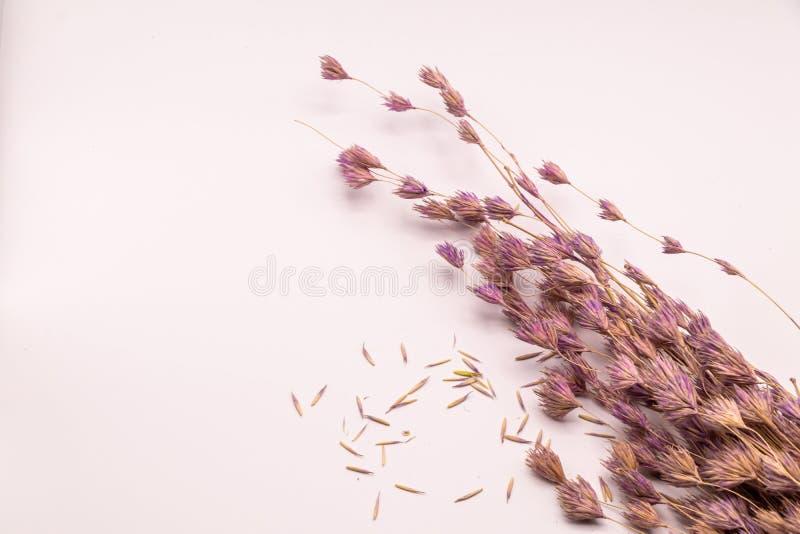 Bukett för selektiv fokus av torkade blommor på vit bakgrund Suddig och mjuk gräsblomma royaltyfri fotografi