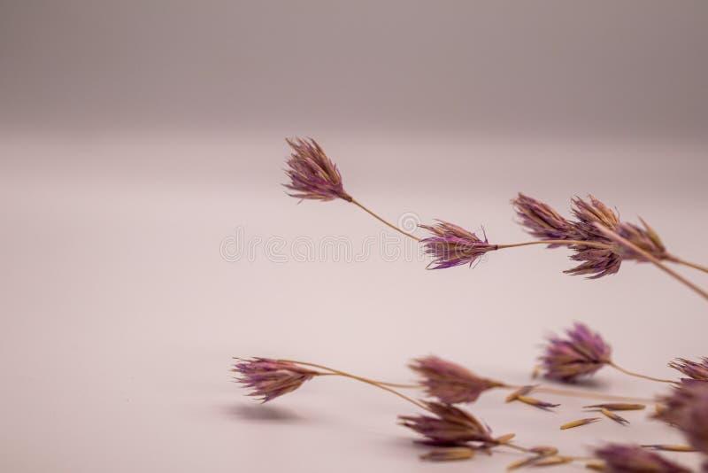Bukett för selektiv fokus av torkade blommor på vit bakgrund Suddig och mjuk gräsblomma arkivfoton