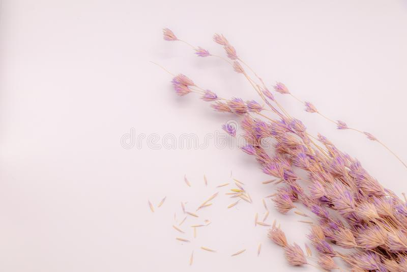 Bukett för selektiv fokus av torkade blommor på vit bakgrund Suddig och mjuk gräsblomma royaltyfri foto
