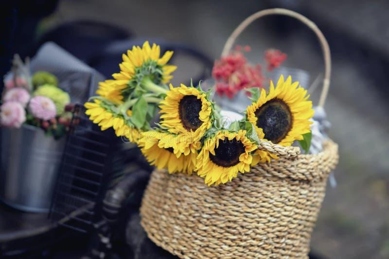 Bukett för vide- korg av av nya ljusa solrosor, lantlig sommar, höstbakgrund Romans förälskelse, hälsningskort royaltyfri fotografi