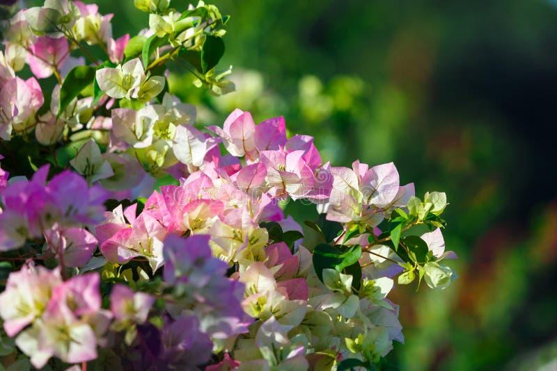 Bukett liten bukett, bukett med blommor fotografering för bildbyråer
