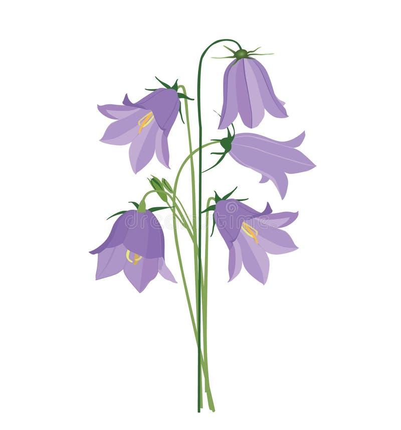 Bukett med lila blåklockor vektor illustrationer