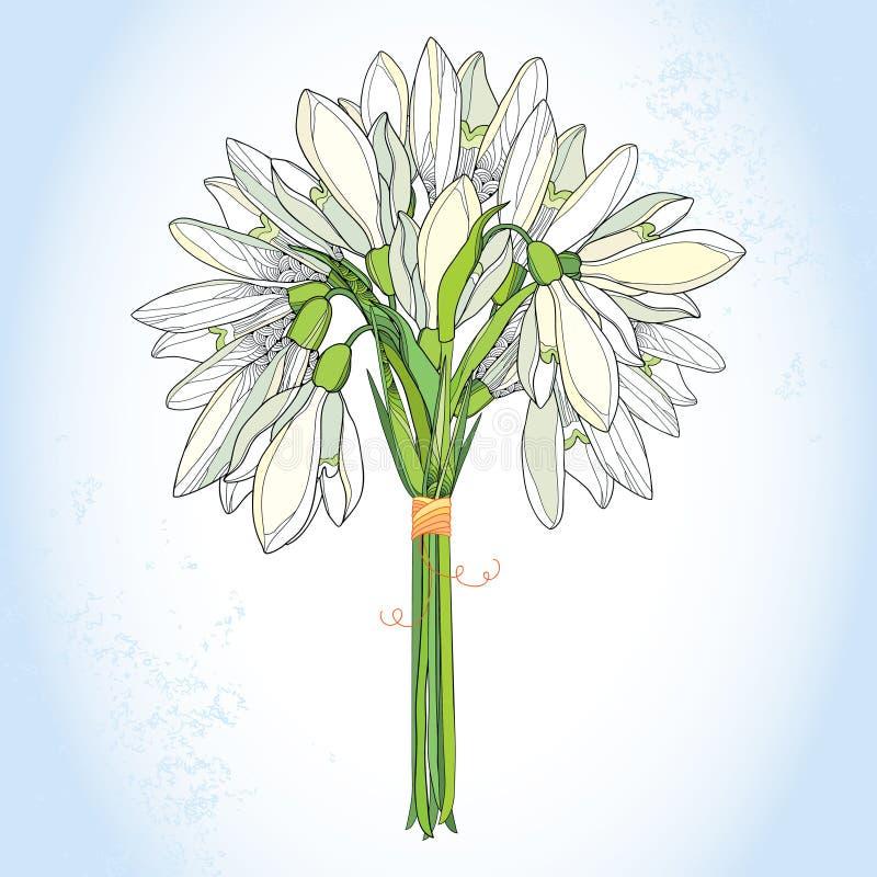 Bukett med utsmyckad snödroppe eller Galanthus i vit på ljuset - blå bakgrund vektor illustrationer
