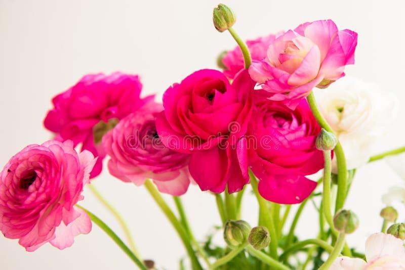 Buketten av den färgrika persiska smörblomman blommar (ranunculusen) royaltyfri fotografi