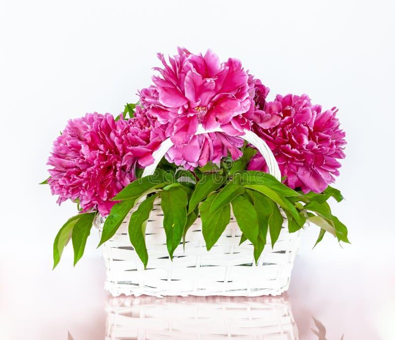 Buketten av den röda pionen blommar i en vit korg royaltyfri bild