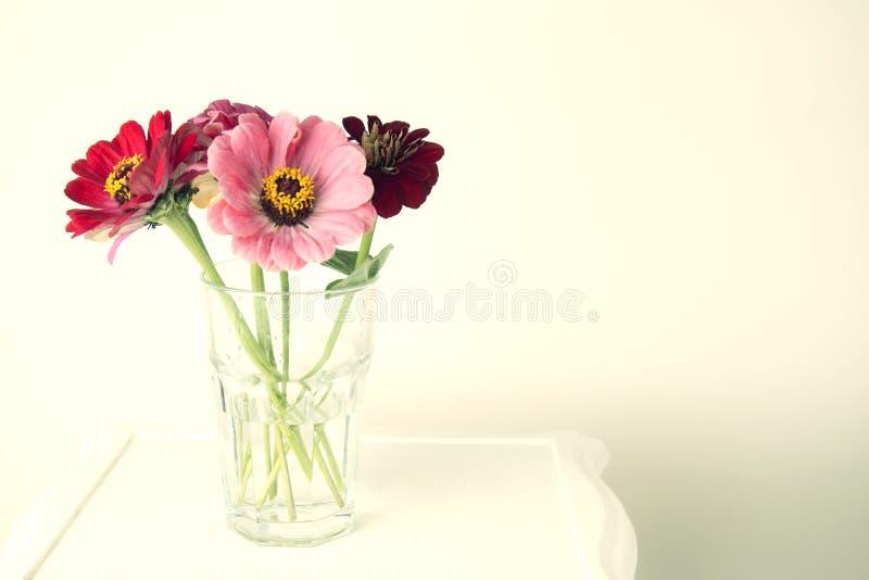 Buketten av den rosa zinniaen blommar i en isolerad vas inomhus kopiera avstånd royaltyfri bild